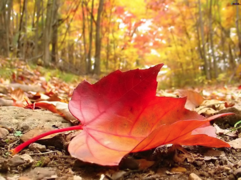 5 Ayurveda Tips For Transitioning Into Fall Season